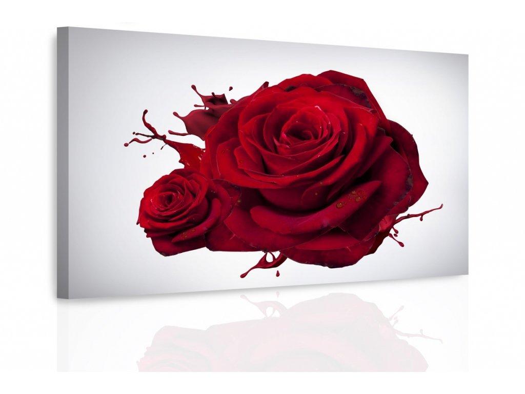 Obraz - Růže (Velikost 120x80 cm)