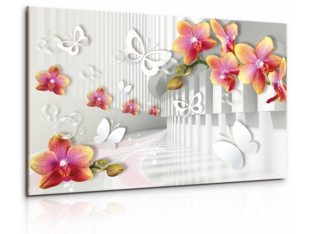 Obraz Abstraktni motýlí orchidej (Velikost 120x80 cm)