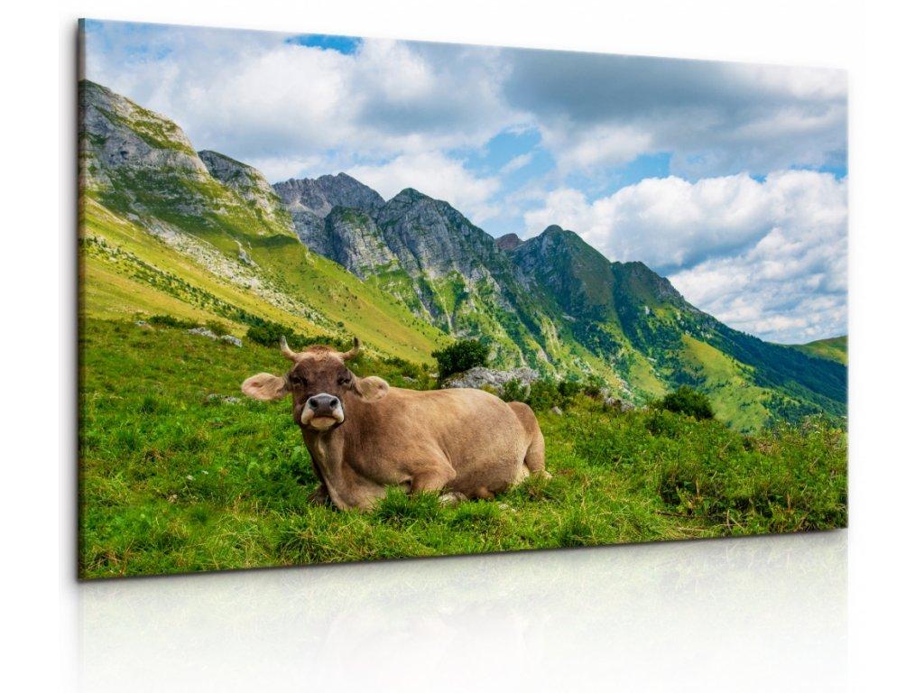 Obraz Alpská kráva (Velikost 90x60 cm)