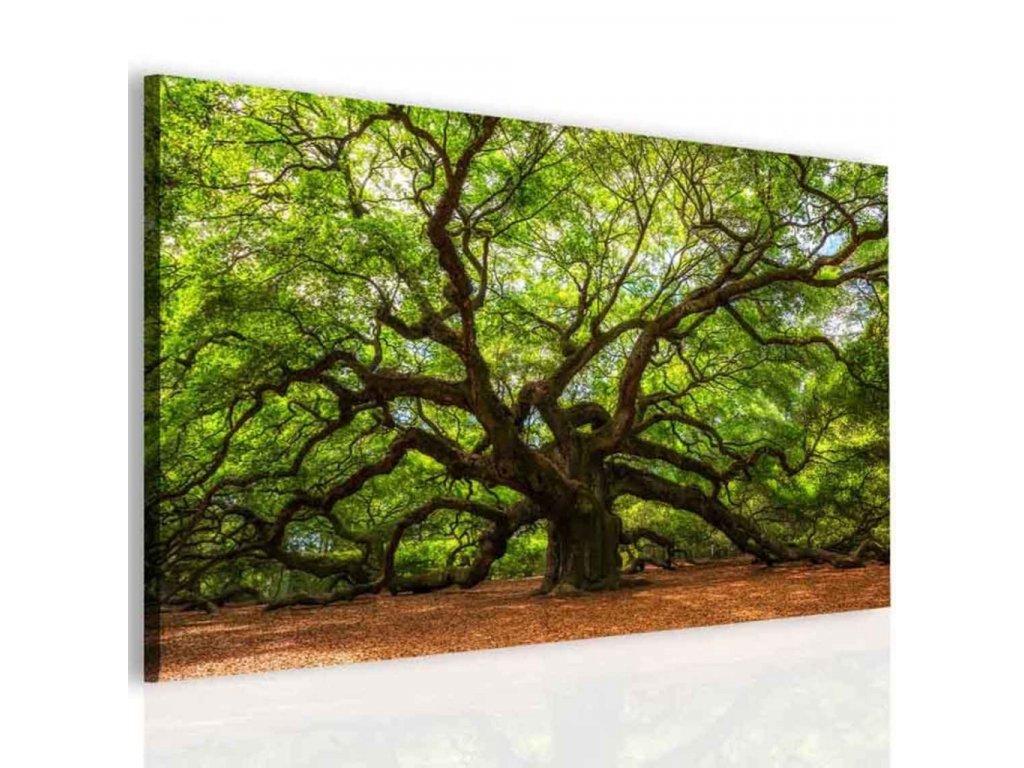 Obraz andělský dub (Velikost (šířka x výška) 120x90 cm)