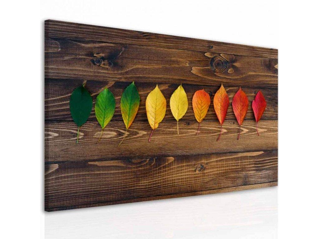 Obraz barevné listy na dřevě (Velikost (šířka x výška) 120x80 cm)