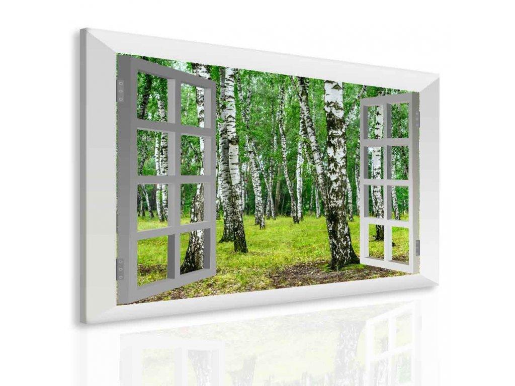 Obraz březový háj za oknem (Velikost (šířka x výška) 100x80 cm)