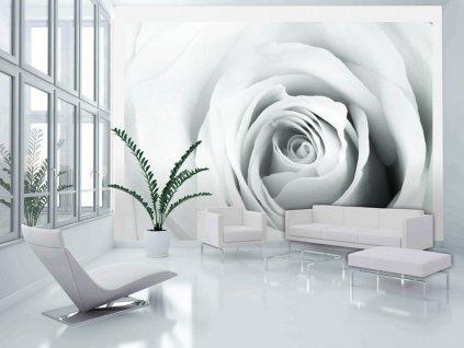 Tapeta bílá růže (Rozměry (š x v) a Typ 147x105 cm - samolepící)