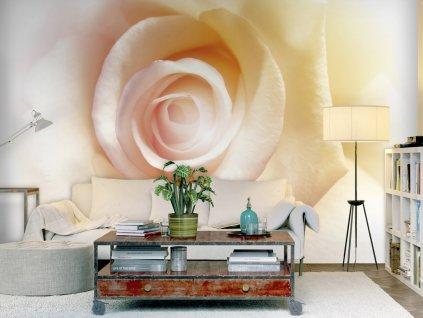 Tapeta čajové růže (Rozměry (š x v) a Typ 147x105 cm - samolepící)