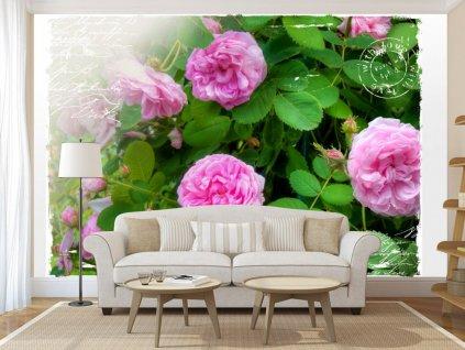 Tapeta divoká růže (Rozměry (š x v) a Typ 147x105 cm - samolepící)