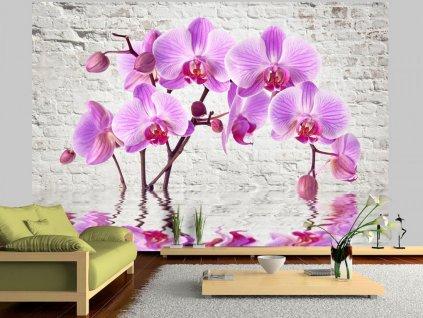 Tapeta odraz orchidejí (Rozměry (š x v) a Typ 147x105 cm - samolepící)