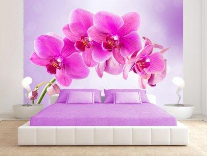 Tapeta růžová orchidej (Rozměry (š x v) a Typ 147x105 cm - samolepící)