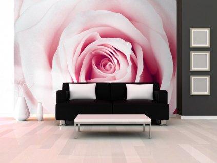 Tapeta růžový labyrint (Rozměry (š x v) a Typ 147x105 cm - samolepící)