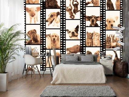 Zvířecí rám (Klasické tapety 49x1000 cm - samolepicí)