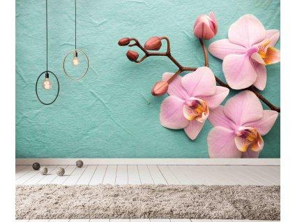 Fototapeta Orchidej