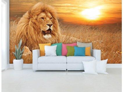 Tapeta Lev v trávě