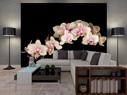 Fototapeta -Orchidej na černé (Rozměry (š x v) a Typ 147x116 cm - samolepící)