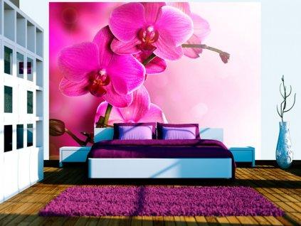 Fototapeta působivá orchidej (Rozměry (š x v) a Typ 147x116 cm - samolepící)