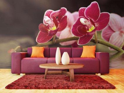 Orchidej ve vodě (Rozměry (š x v) a Typ 147x116 cm - samolepící)