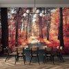 Tapeta červený podzim v lese