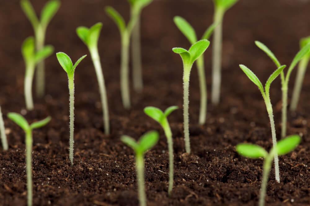 Suchý led - využití v zemědělství i na zahradě