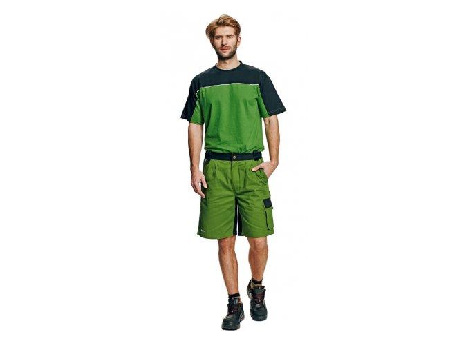 STANMORE šortky