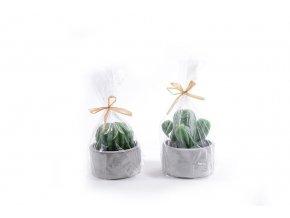 šťavnatá rostlinná svíčka s betonovým hrncem v. cm různé dekorace 12x9,5