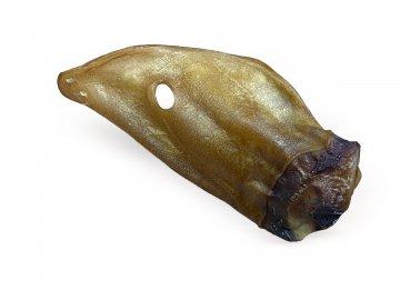 hivězí ucho[9934]