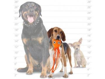 t oc jr squid or dog