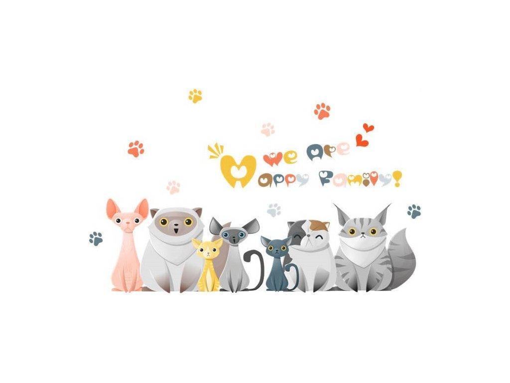Kočička v šortkách obrázky