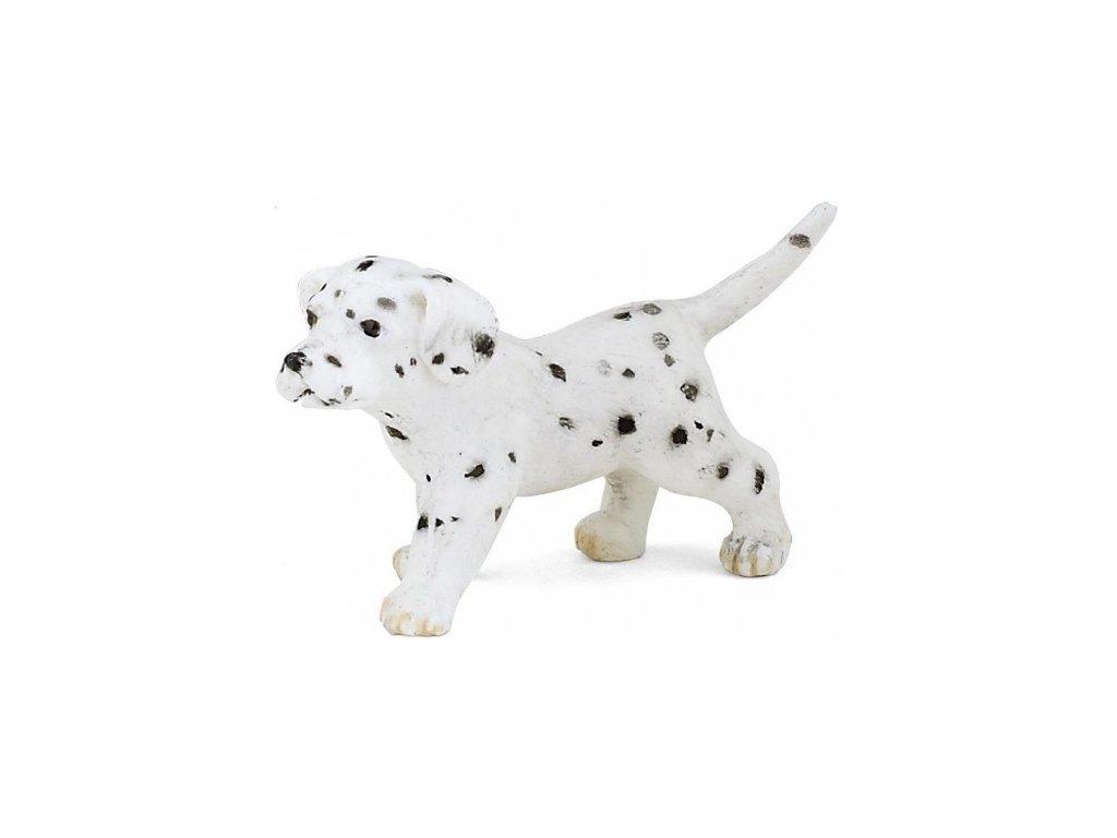 Papo Dalmatin štěně