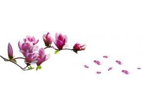 Samolepka na zeď magnolie květy