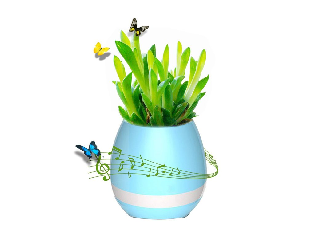 kvetinac modry