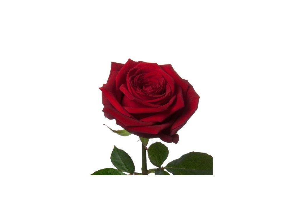 1093 3 27157 red naomi rose 1000px 1 1 removebg preview