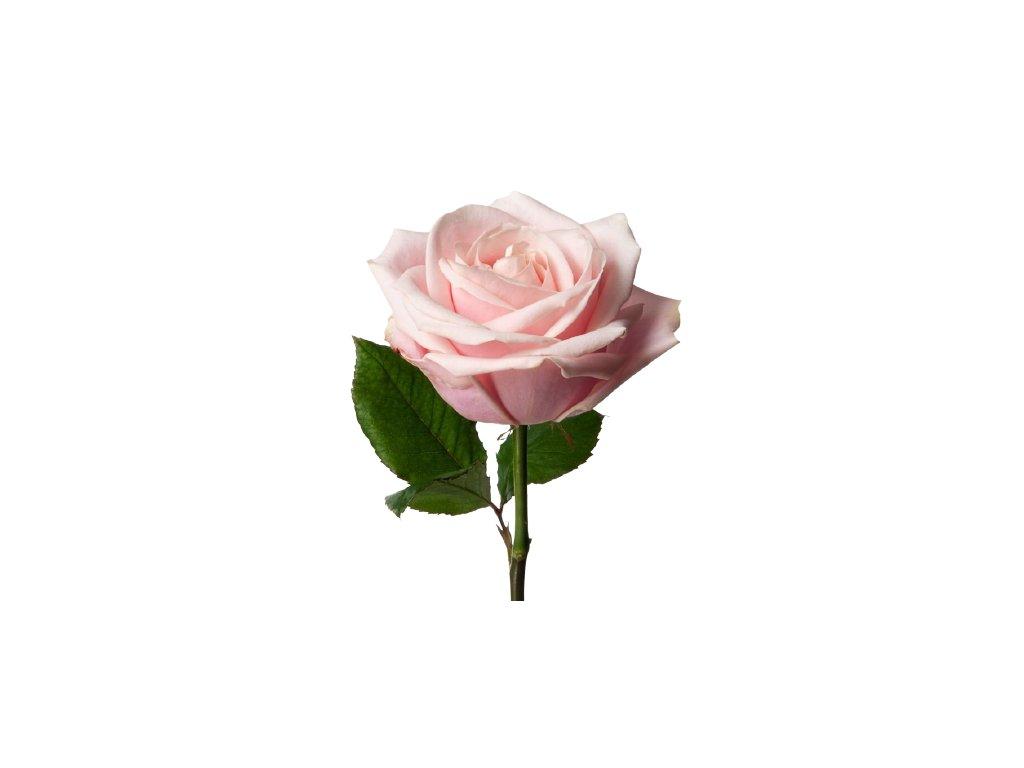 1090 2 26965 rose pinksweetavalanche cut rse sav plp prd 001 1 1 removebg preview
