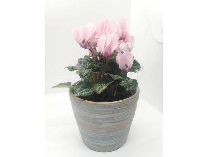 Brambořík s květináčem