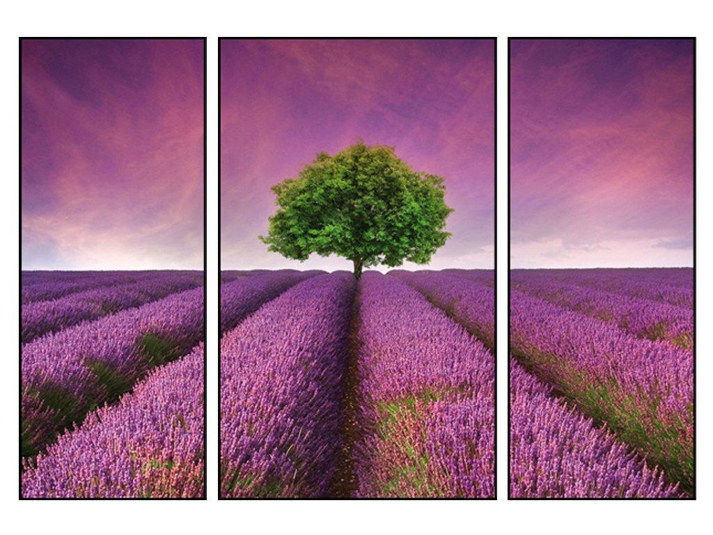 Obraz třídílný 70 x 50 cm - levandulové pole 50