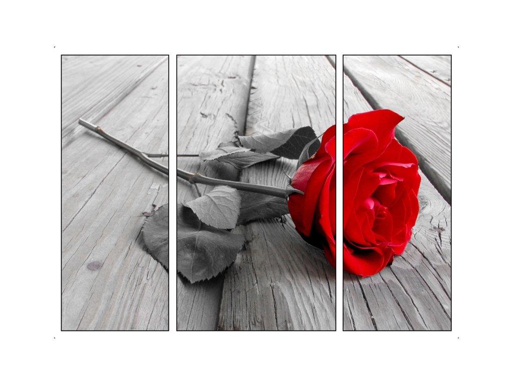 červená růže Obraz třídílný 70 x 50 cm
