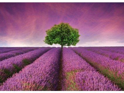 Obraz levandulové pole 70 x 50 cm