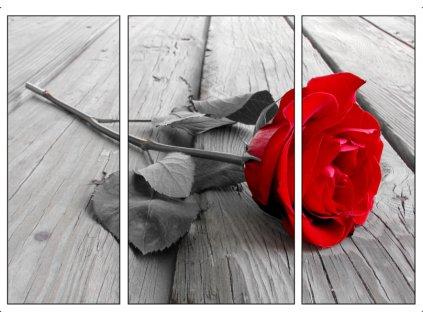 Obraz třídílný 70 x 50 cm červená růže