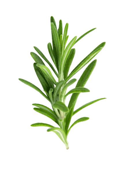 esencialni-olej-rozmaryna
