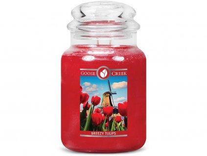 goose creek svicka tulipany breezy tulips