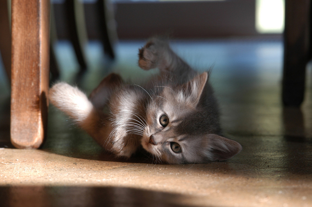 Výbava pro kotě, kočku