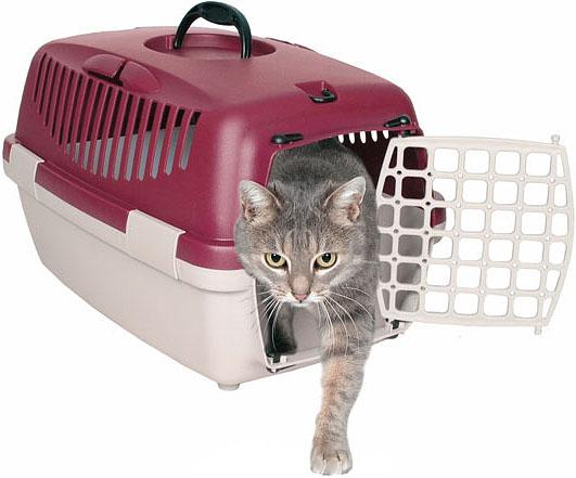 Jak přepravovat kočku v autě - tipy a triky