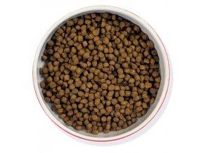 Meowing kitten 450