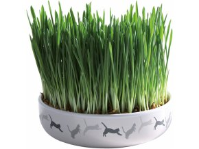 Tráva pro kočku v keramické misce - 50 g