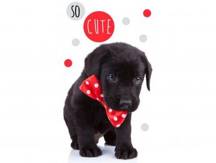 Detský froté uterák 30x50 - Roztomilé šteniatko