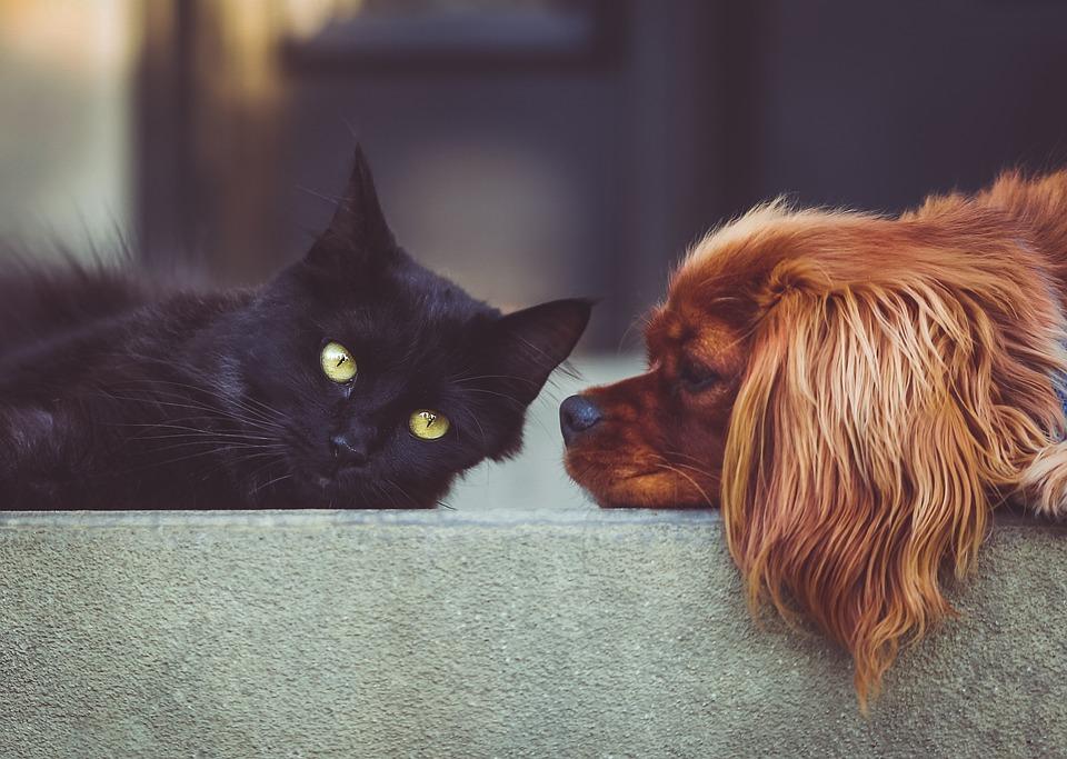 Kameny vhodné pro domácí zvířata