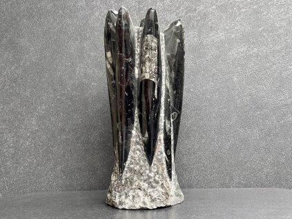 zkameněliny, orthoceras věž