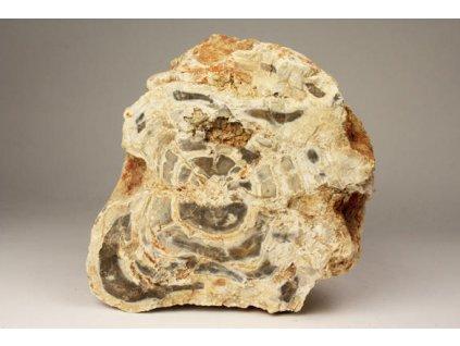Zkamenělé dřevo 2,95 kg