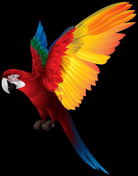 Dospelé vtáky