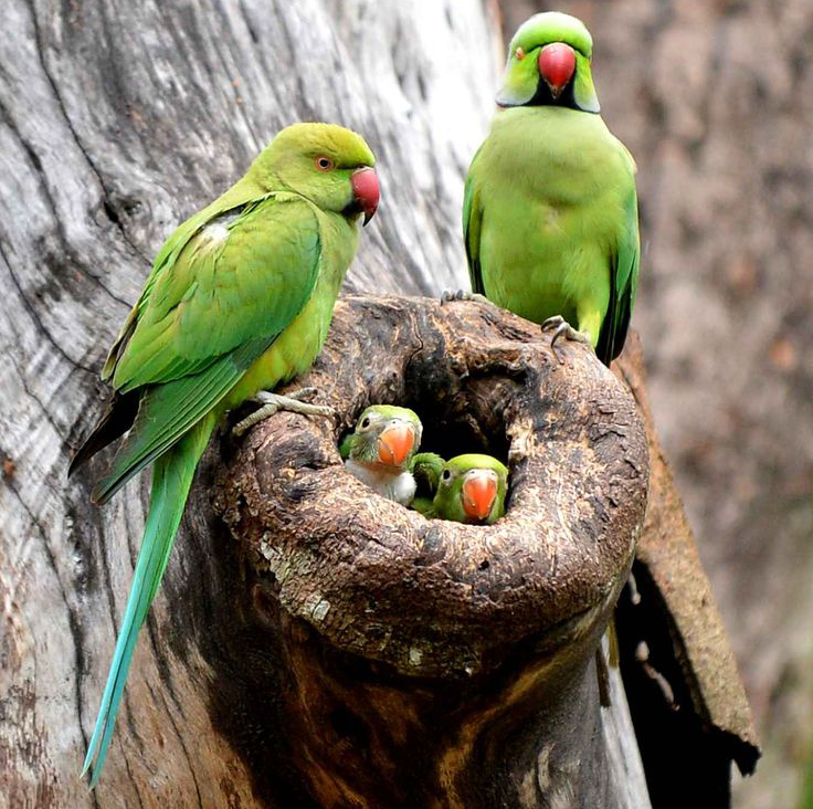 Rodičia kŕmiaci mláďatá + hniezdiace vtáky