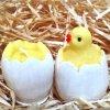 Sada svíček - kuřátko ve skořápce + vajíčko