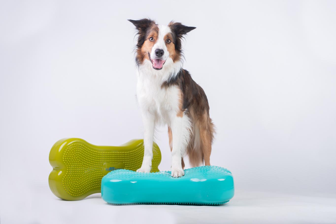Cvičení na balančních pomůckách, neboli Dogfitness