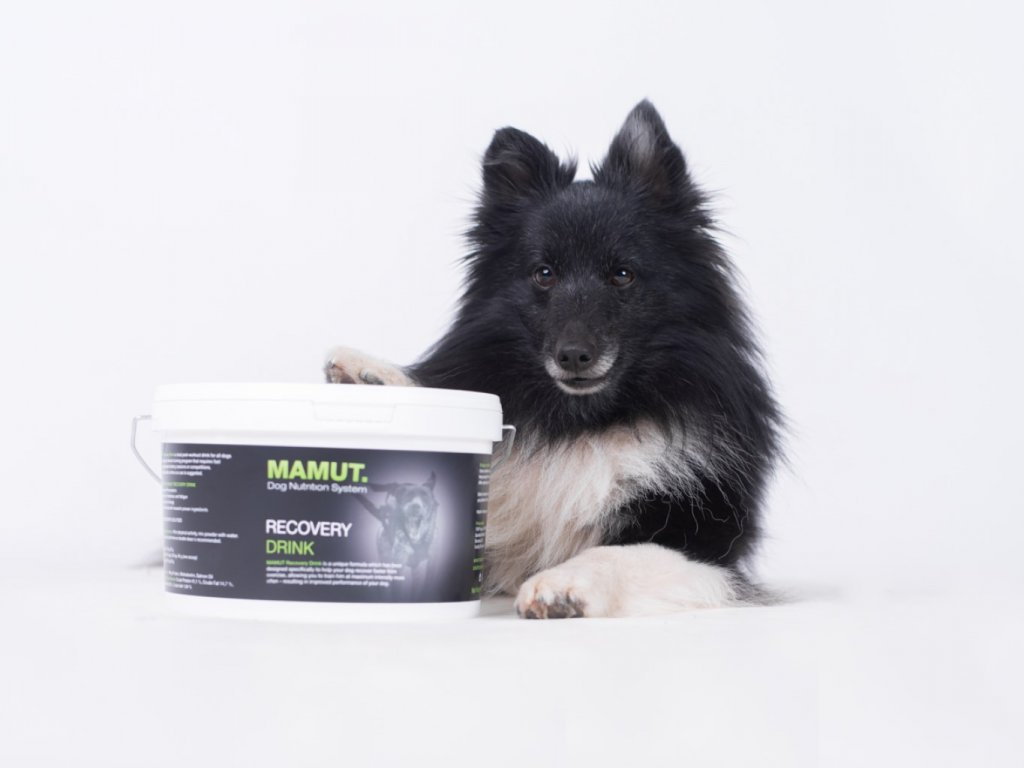 Mamut Recovery drink